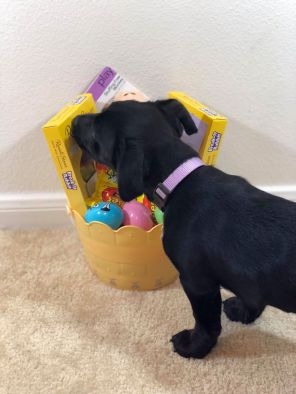 Bella's first Easter!