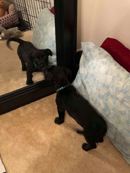 Bella's first time discovering a mirror!